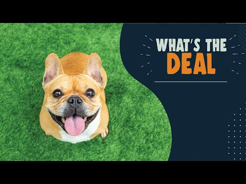 Rules About Bringing Pets Into Canada | What's The Deal?
