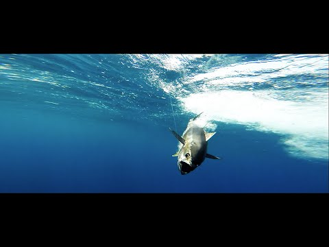 Tuna fishing film- May 2015 - Kalba - UAE