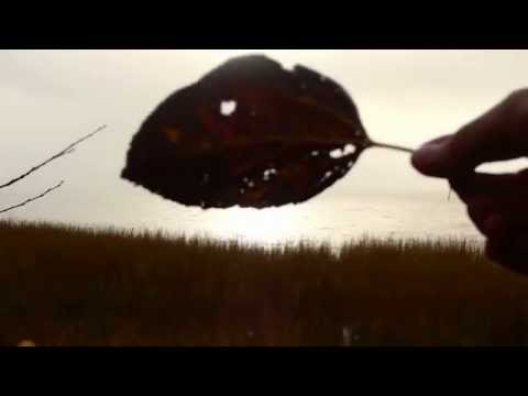 Leaves of Grass - V - Calamus - Close of the Day