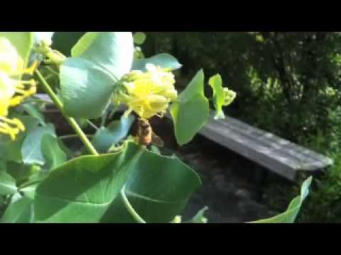 Bees beats animal collective remix