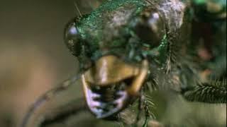НГО  Прирожденные охотники   4 Миниатюра царство насекомых