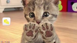Chú Mèo Con | Trò Chơi Cực Vขi | Chị Kiều Hương