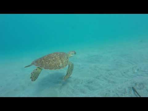 Chasse Sous Marine Saison 2016 2017 Vendee Corse Bretagne Martinique