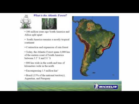 Is there Hope for the  South American Atlantic Forest?