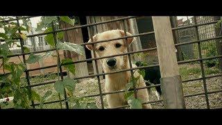 Бездомные животные, помощь приюту для собак. Первый Благотворительный и ПомогиВыжить, Ангарск