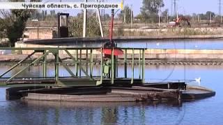 Бишкекская канализация