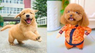 Şirin Yavru Köpek Videoları-Komik ve Eğlenceli(Baby Dogs-Cute and Funny Dog Videos Compilation)