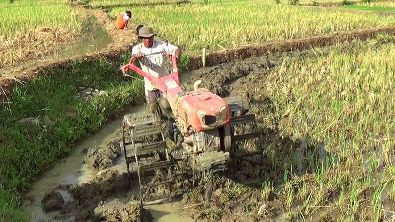 Traktor Sawah Quick G1000 Menggunakan Diesel Kubota RD85DI, Bekerja Membajak Sawah