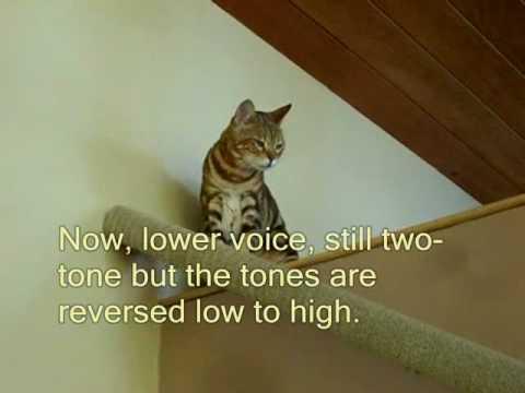 20 Bengal Cat Signs
