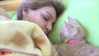 милые кошки утром будят хозяев!!!