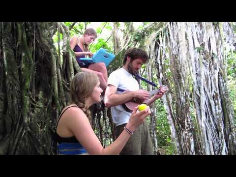 """John Craigie and Shook Twins sing """"So Many Lives"""" from a banyan tree on Maui"""