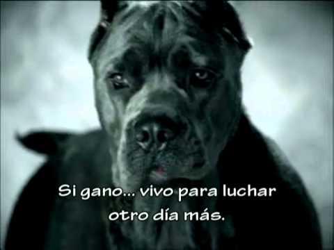 Peace for Dogs (subtitulado español)