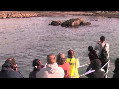 Auckland Whale & Dolphin Safari   Orca land