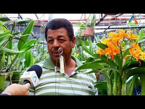 (JC 04/08/16) Começa nesta sexta-feira exposição de orquídeas no Corredor Cultural