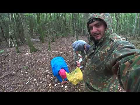 В лес за грибами. Черняховск, Калининградская область
