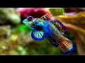 World's Most Beautiful Fishes under the Sea   8th is Dangerous Fish