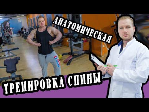 Мышцы спины человека Анатомия Мышц спины, строение