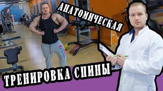 Анатомия - фитнестренировки мышцы спины