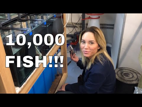 10,000 FISH! One Building! (Ft. Mindi's Coral Reef)
