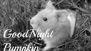Good Night Pumpkin.