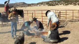 Cattle Branding 2009