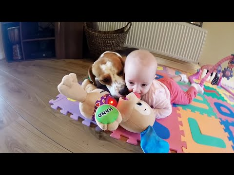 Dog and little baby plays with singing toy