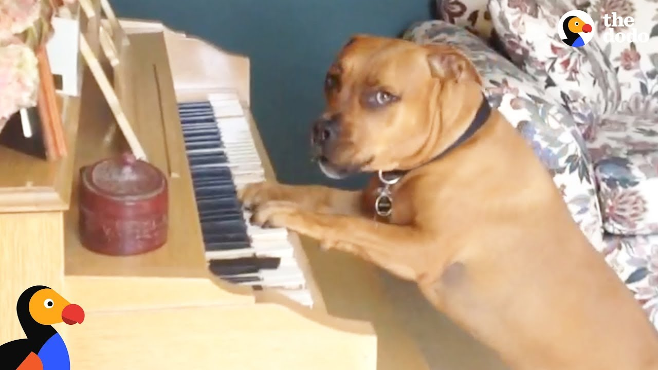 Dog Plays Piano For His Mom | The Dodo