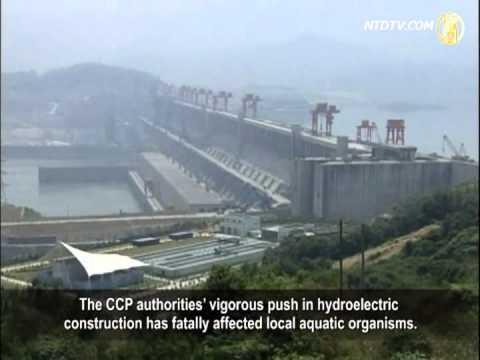Environmental Survey: Yangtze River Ecosystem Collapsing