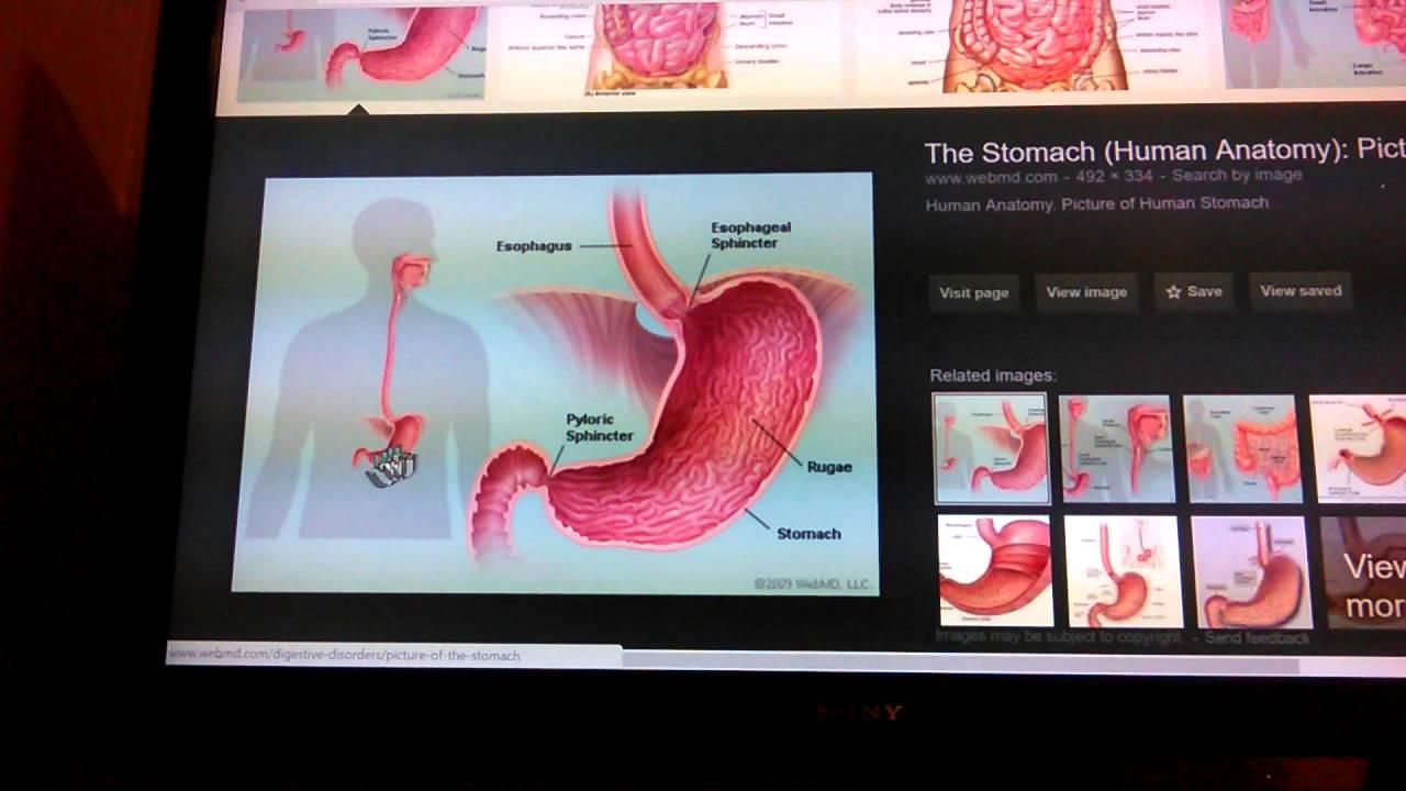 Mandela Effect Human Anatomy Has Changed Youtube