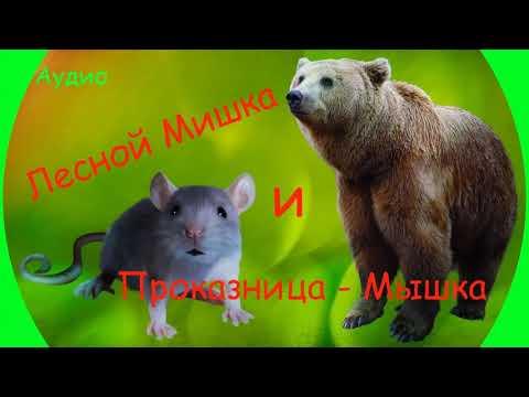 Лесной мишка и проказница мышка мультфильм