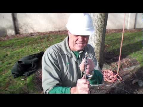How to Cable a Tree