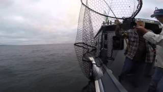 Trolling For Pink Salmon In Puget Sound