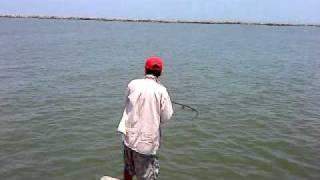 pesca en escolleras de madero