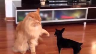 Кот и моська