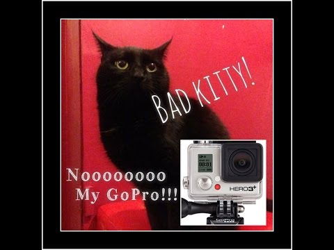 Cat escapes with GoPro