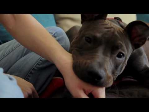 How To Stop A Dog From Biting And Mouthing