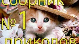 Приколы видео ютуб 2015, сборка лучших видео приколов с животными