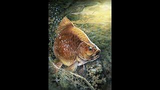 Рыбалка на сети в сибири