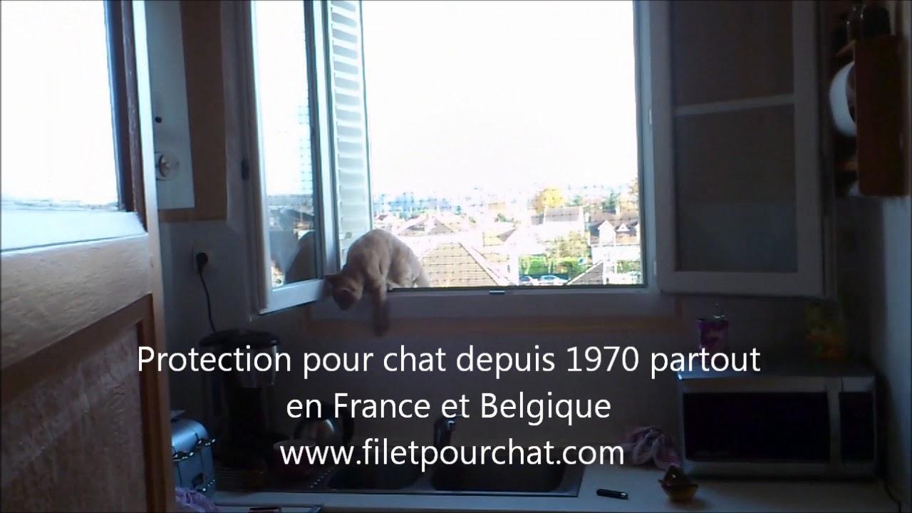 Protection Et Filet Pour Chat à La Fenetre