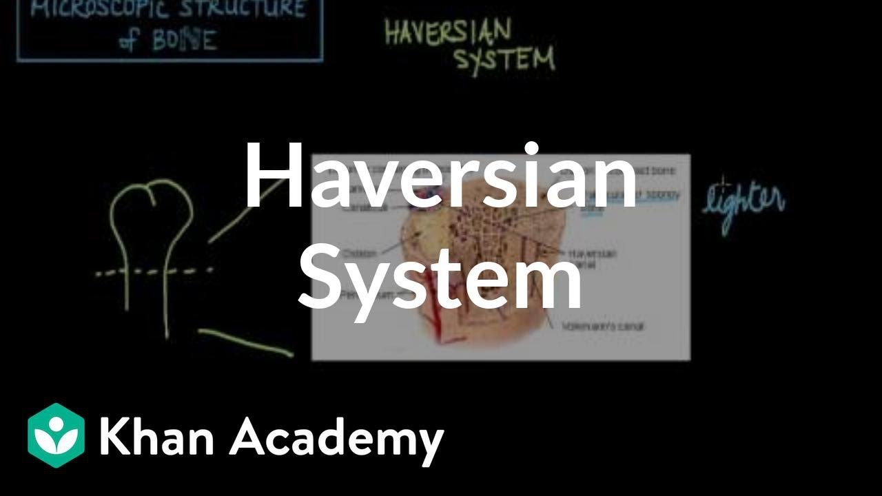 Microscopic Structure Of Bone The Haversian System Video Khan