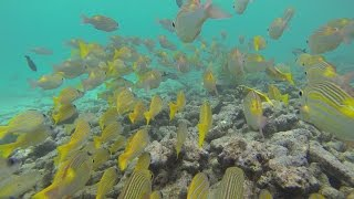 Maldives Underwater Kingdom: colourful tropical sea life