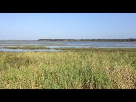 Scene from Myakka River State Park, Sarasota County, Florida