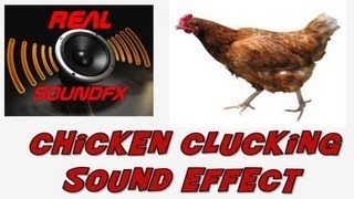 Chicken clucking sound effect - realsoundFX