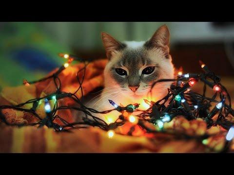 С Новым годом! Отличные пожелания и кошки.