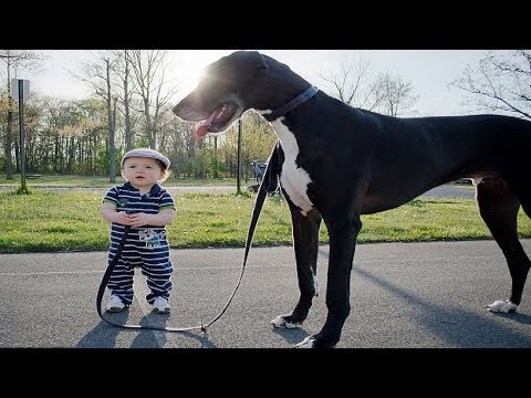 The Baby is the Leader of the Dog - FUNNY Dog and Baby Walking Together