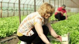 80 de familii produc 5000 de tone de legume pe o suprafata de 60 ha pentru prima cooperativa agricola fondata de un retailer.   Impreuna crestem pentru tine!  https://carrefour.ro/cooperativa-agricola