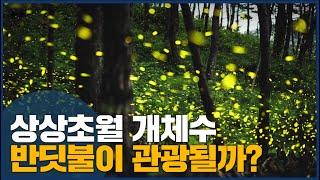 반딧불이 사는 기장, 생태관광 기대