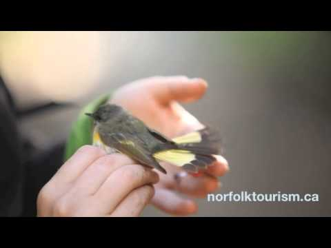 bird banding at long point bird observatory youtube. Black Bedroom Furniture Sets. Home Design Ideas