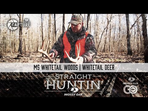 MS Whitetail Woods • Whitetail Deer • Straight Huntin'