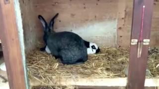 Прикол с кроликов смотреть до конца  ржака